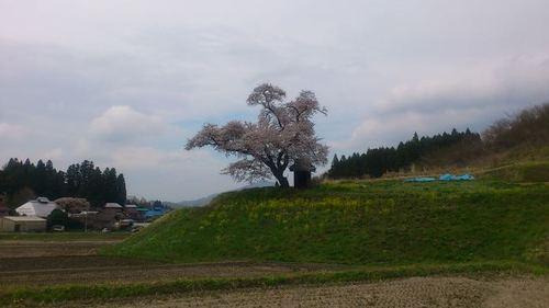 Tamura_ozawasakura_2